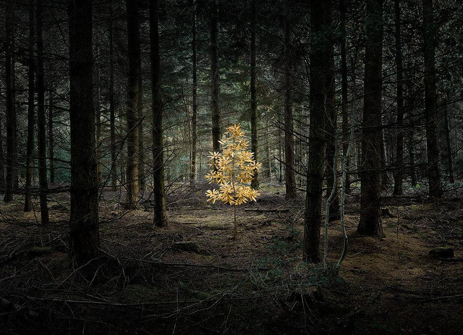 Into the woods, Ellie Davies280.jpg