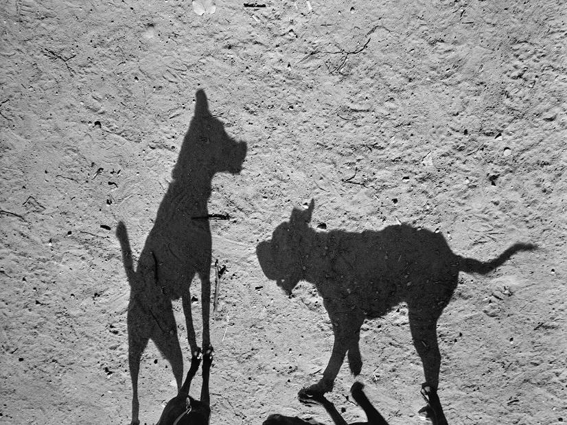 Mondo cane, Thomas Roma1_1280.jpg