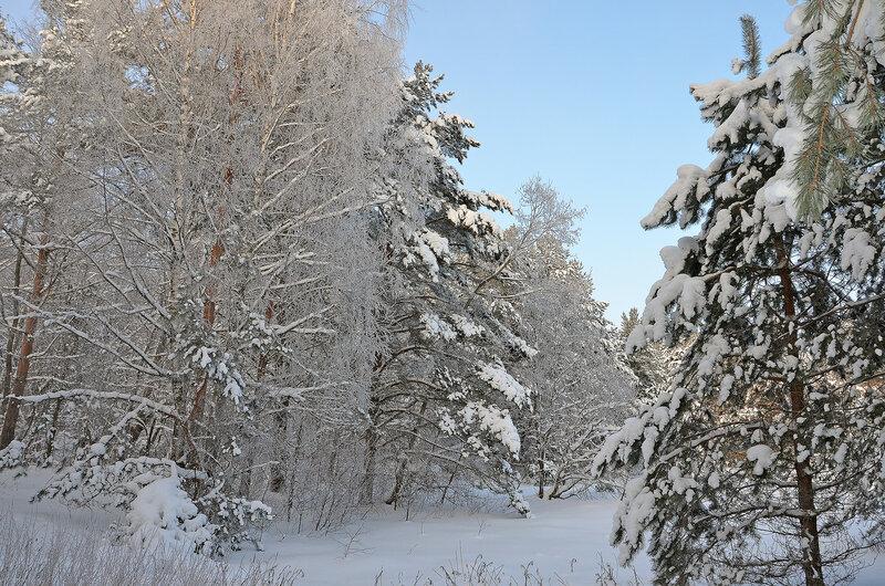 И зимний лес стоит застывший...
