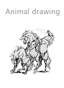Книга Animal drawing