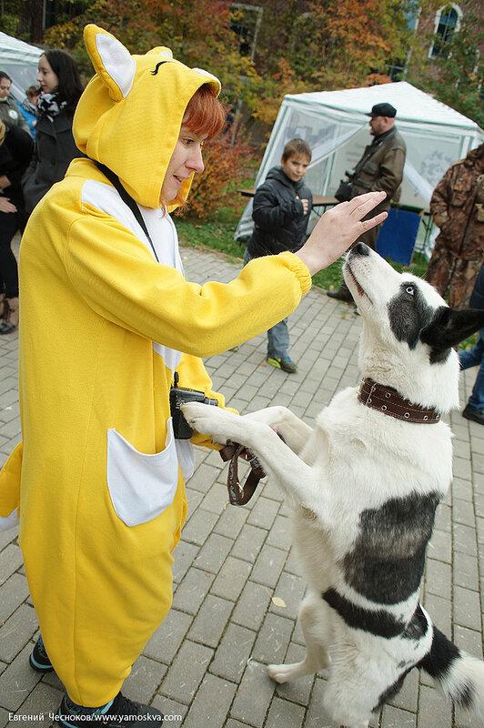02. Фестивальный парк. Собаки. 04.10.14.18..jpg