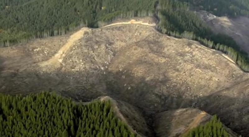 Вырубки леса в США