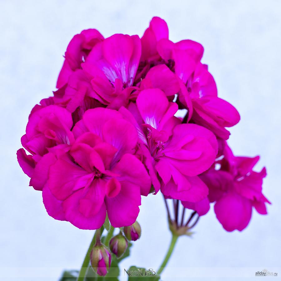 Я люблю все цветы, выпуск 132 | Ра10f8зные цветы.