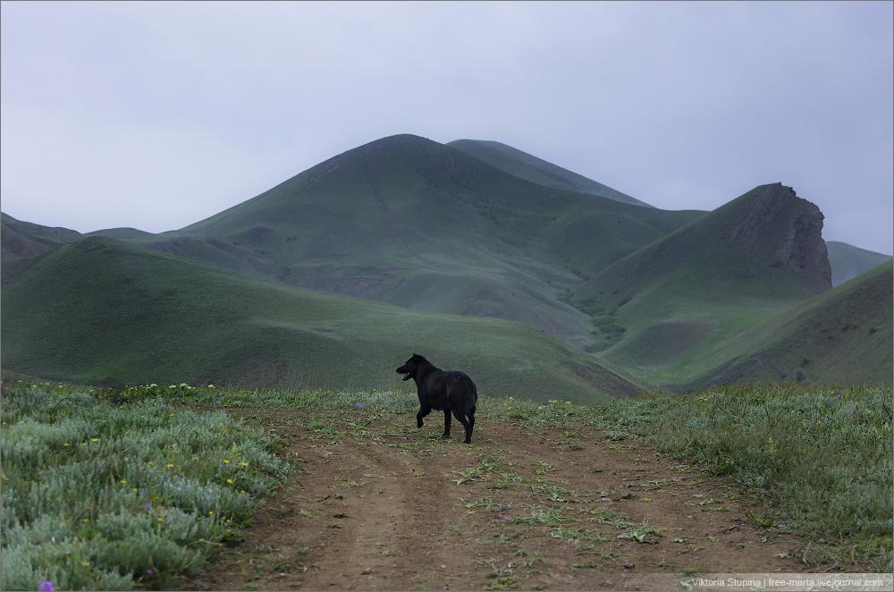 с собакой из Коко в Орджо и назад