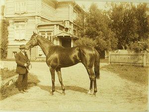 Участникскачек с гнедым жеребцом 5-ти лет Дарьялом-победителем скачек на приз  великого князя Дмитрия Константиновича.