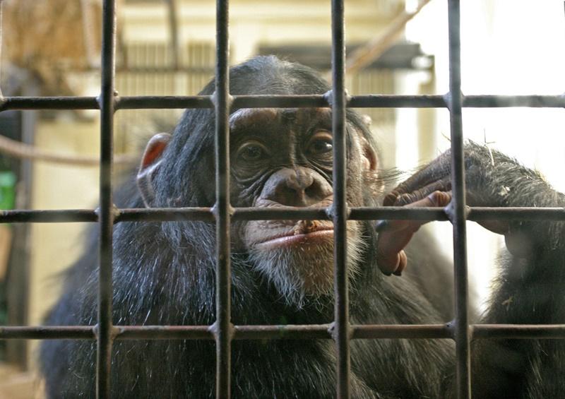 10 невероятных историй о животных-преступниках