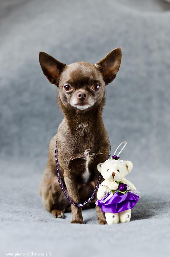 Фото 11. Собака Бетти и ее гламурная подруга (f 2.0; В=1/60; ИСО-800). Уроки фотографии для новичков. Примеры фотографий на Никон Д5100 и фикс Никон 50/1,4.