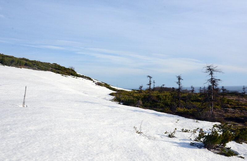 снежнег.jpg
