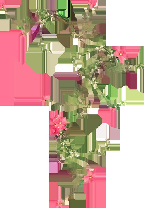 Вьющаяся роза посадка и уход Обрезка вьющихся роз