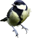 mzimm_snow_wonder_bird.png