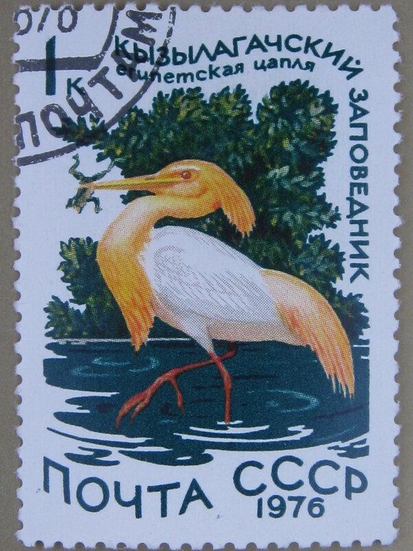 Египетская цапля (Bubulcus ibis). Кызылагачский заповедник (Азербайджанская ССР)
