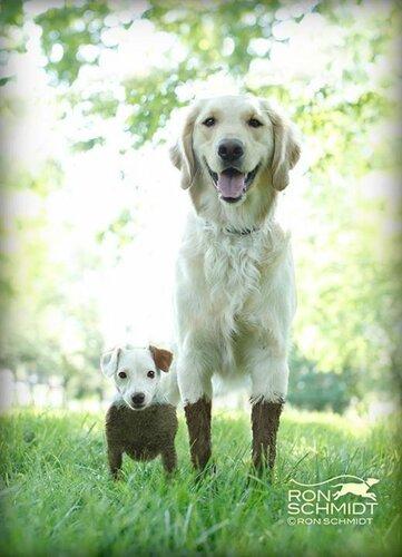 mud_and_muck.jpg