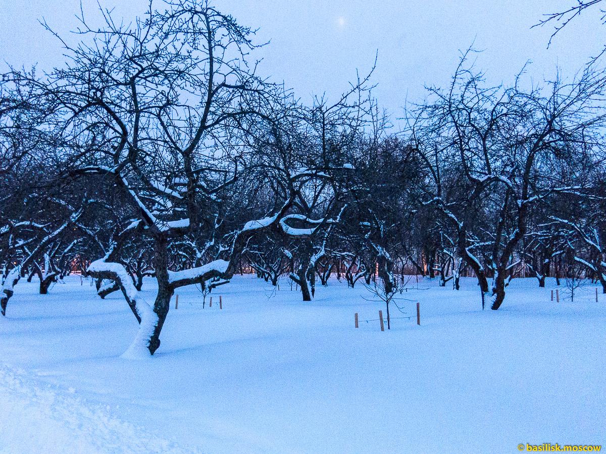 Москва. Парк Коломенское зимой. Январь 2016.