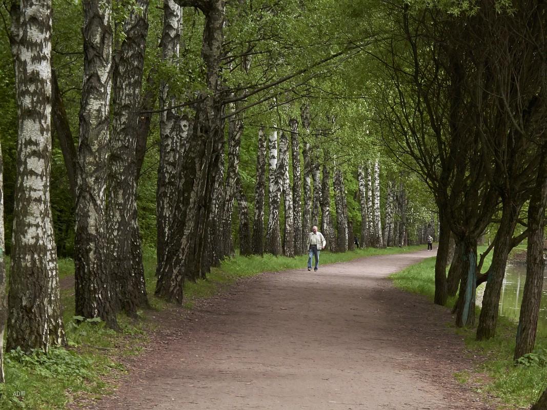 Прогулка в Сокольники