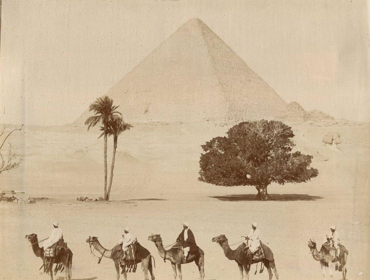 Гиза.  Пирамиды и бедуины