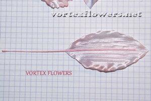 "Мастер-класс. Орхидея ""Элен""от Vortex  0_fbf23_180105c9_M"