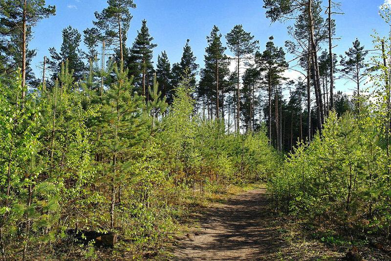 Болотная тропа Pääsküla. Нымме.