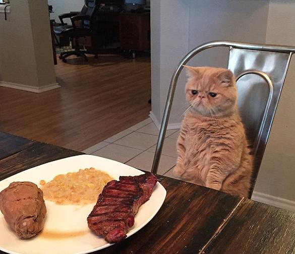 Прикол про кота, который похож на человека