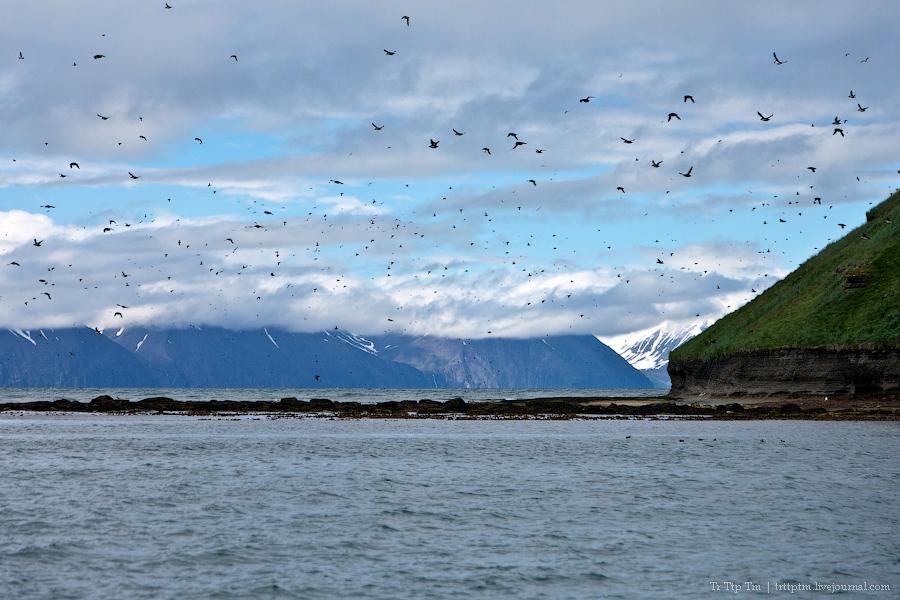 4. Дороги Нордюрланда и киты залива Скъяльфанди.