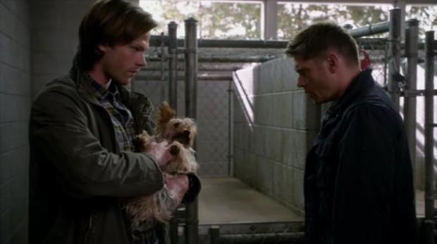 Дин и маленькая собачка, а также другие вопросы