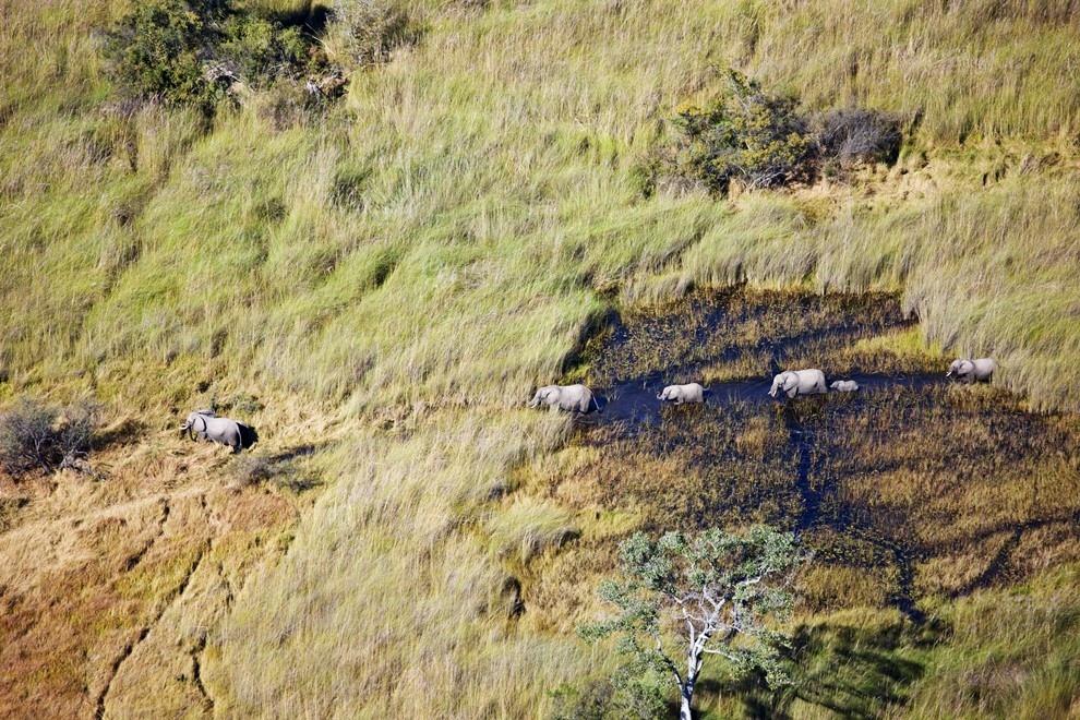 11. Африканские слоны в дельте реки Окаванго
