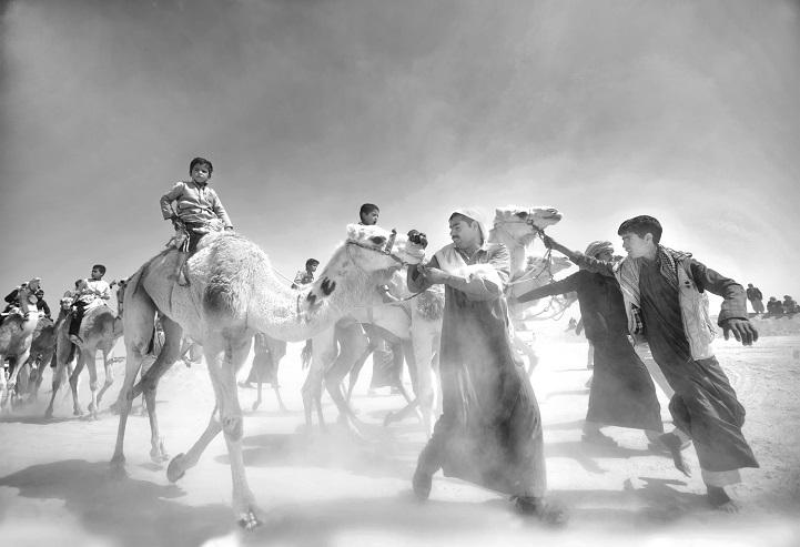 8. Поощрительная премия — «Рынок верблюдов» (автор: Мохамед Камаль, Египет). Торговцы верблюдами вхо