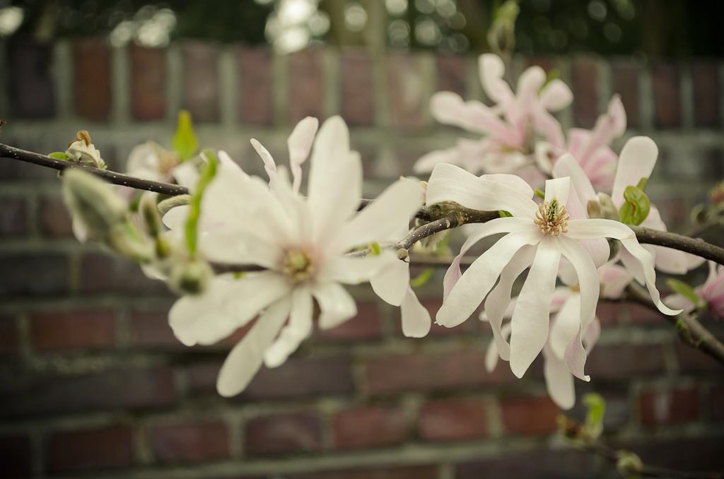 12. Весна... Учимся фотографировать цветы на камеру Nikon D5100 KIT 18-55