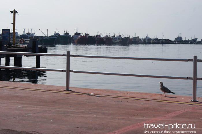 чайка на пирсе в Стамбуле
