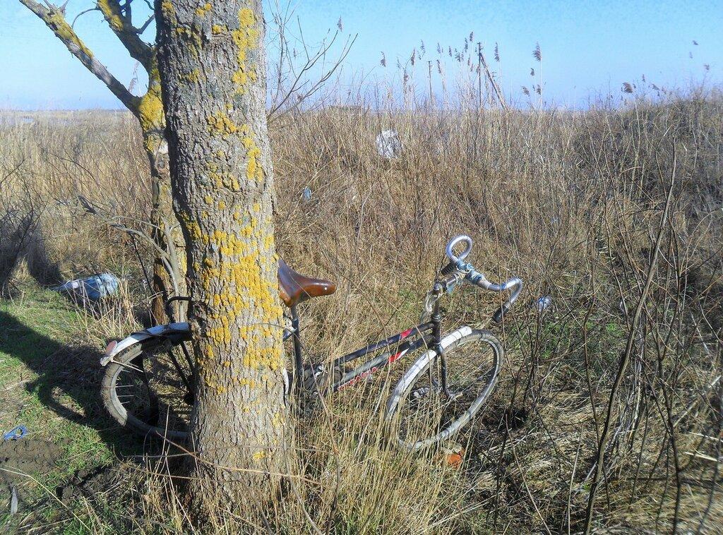 У дерева, в день ясный февраля... SAM_5441.JPG