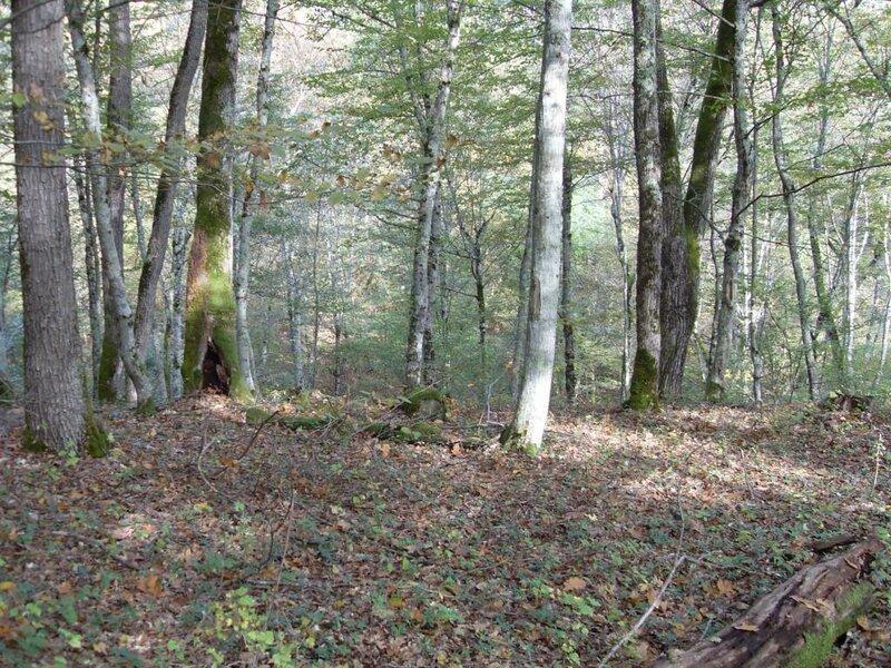 11 октября 2008, под Горячим Ключом, в лесу (17) .JPG