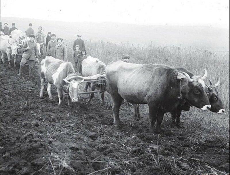 Сельские жители раннего СССР. 053.jpg