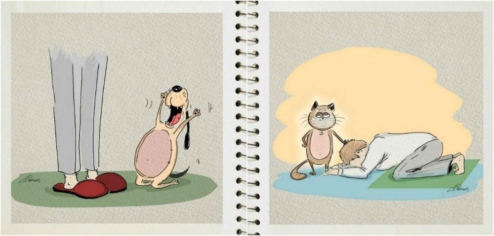 Коты против собак