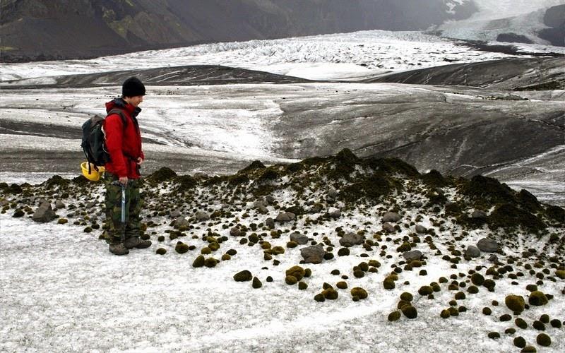 Ледниковые мыши Растения