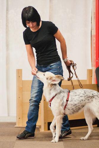 Любовь Гиненко курсы по тренировке щенков и взрослых собак