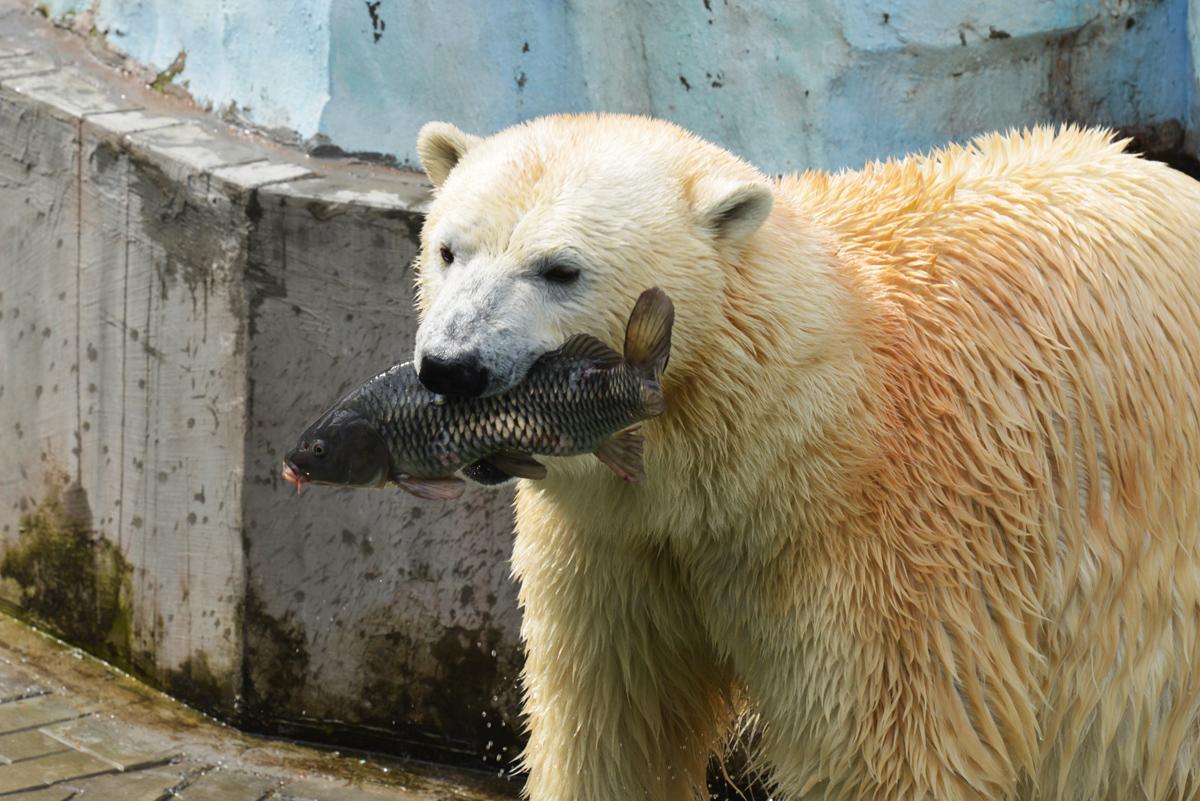 Андрей Киреев. Новосибирский зоопарк.