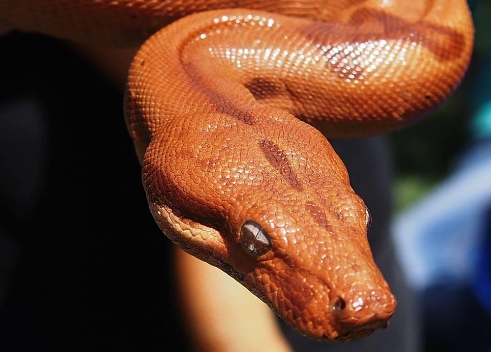 змей.jpg