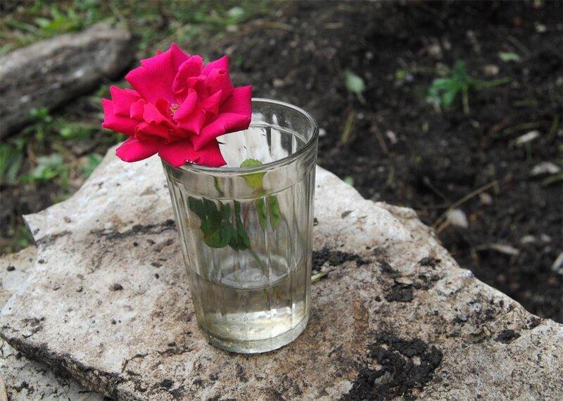 Цветок, похожий на розу