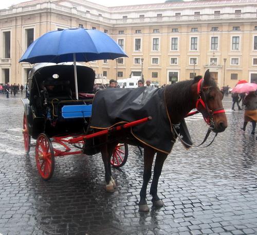 лошадки (1).jpg