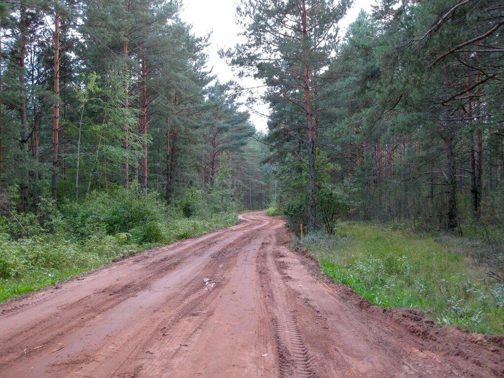 Лесная дорога, Псковская область