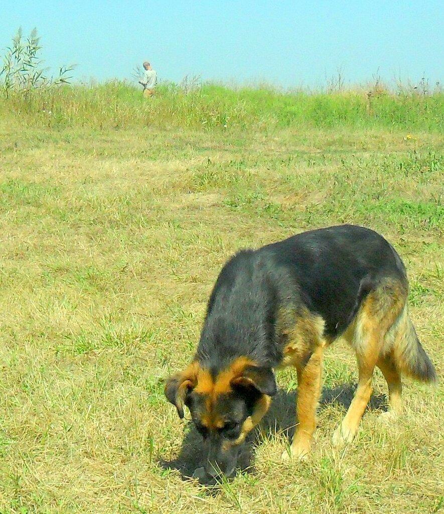 Есть что то интересное в траве ... SAM_3445 - 01.JPG