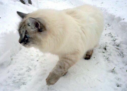 По чистому снегу