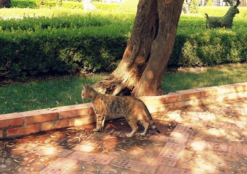 Сицилийский котик.jpg