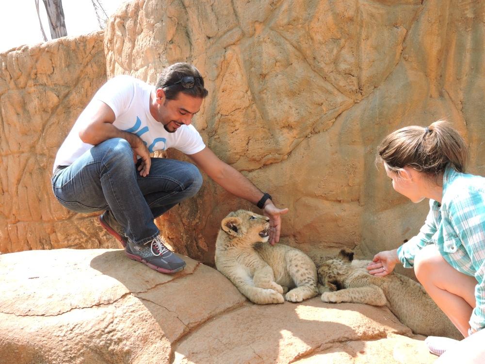 lions32.jpg