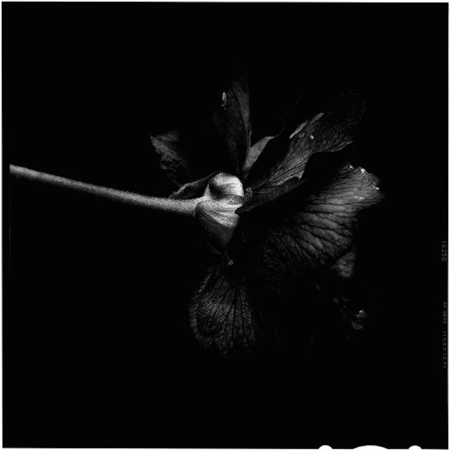 Send no flowers, Bettina Güber1280.jpg