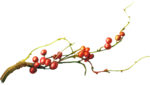 ldavi-wintermouestocking-redberries1.png