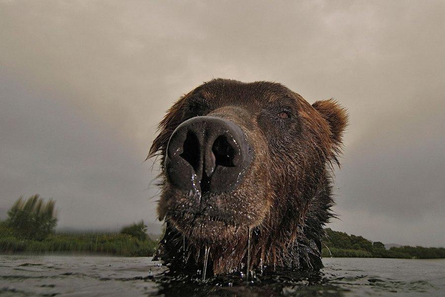 Rossijskij-fotograf-goda8230-Sergej-Gorshkov-50-foto
