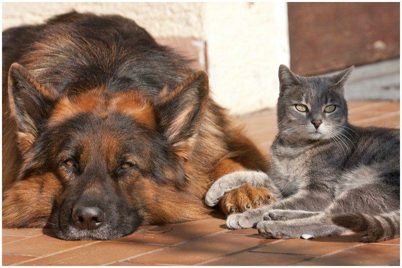 Настоящая дружба