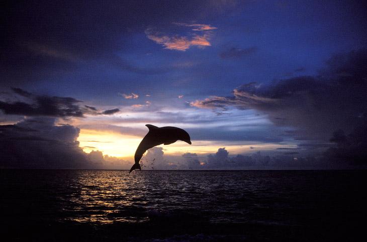 2. Две птицы во Флориде.