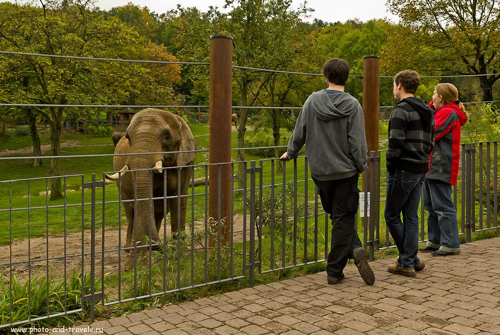 18. Любуемся африканскими слонами в Германии. Зоопарк Opel Zoo. Интересные места недалеко от Франкфурта, которые можно посетить за один день.