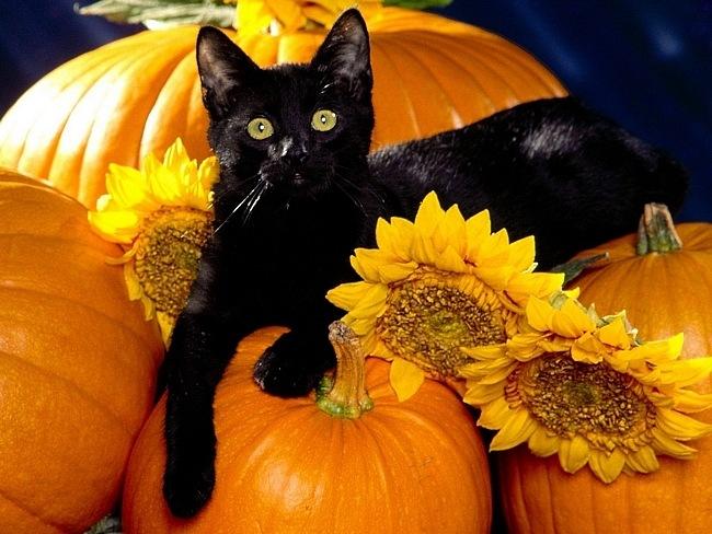 Хэллоуин.Thanksgiving Day.